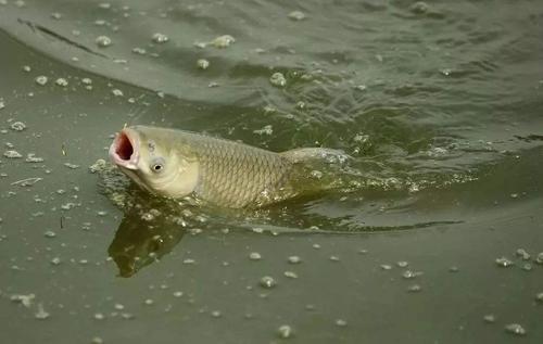 一种最灵活,最直接的钓法使用得当,渔获自然不会少插图
