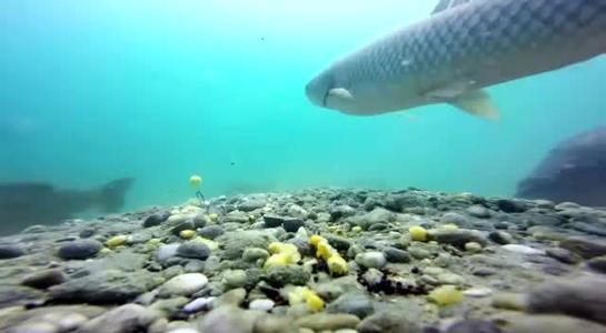 釣魚打窩后,長時間不見魚口時,調整下面這幾點看看
