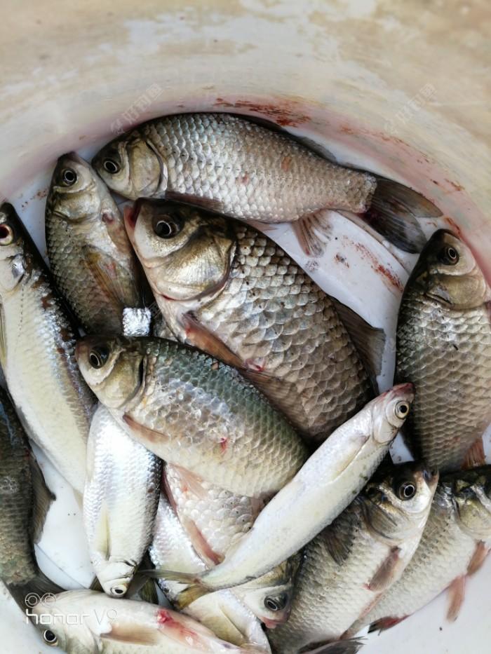 一天的渔获,不在乎多少,过过瘾吧,最后祝全体钓友们身体健康渔获多多心想事成!!