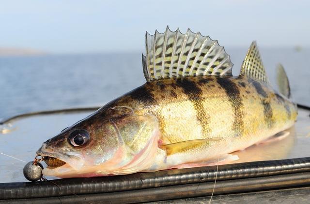路亚垂钓中浮水,悬停,沉水这三种米诺类拟饵的特性(图2)