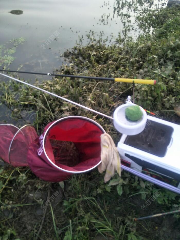 江湖猎人麦香鲫,奶粉,拉丝粉作饵,给鱼儿准备的绿色食物