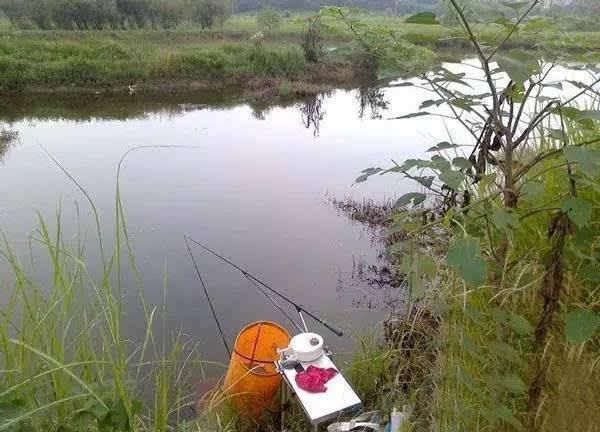 关于肥水作钓,大鱼确实难钓,但是并不代表鱼难钓