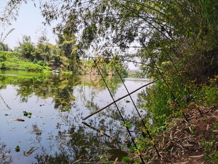 这是没涨大水之前的照片,河两岸绿油油的