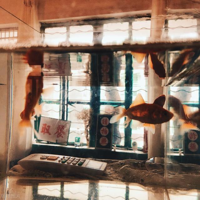 到饭店去吃鱼,这2种鱼你吃过吗