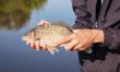 野釣鯽魚:立冬之前,謹記這6不釣