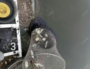 浮台实战河中间,鱼获不多玩的欢
