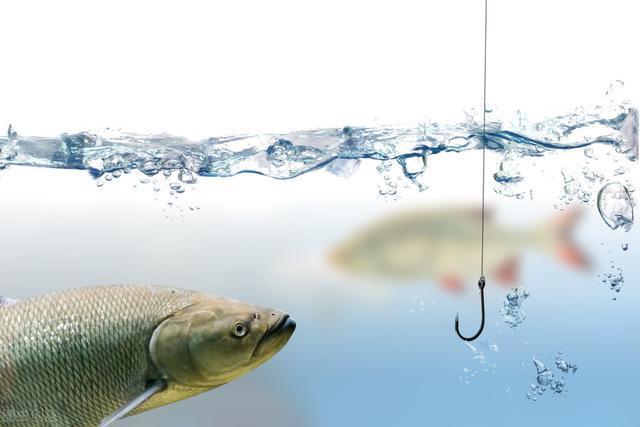 到一处水域钓鱼,子线长度要怎么选