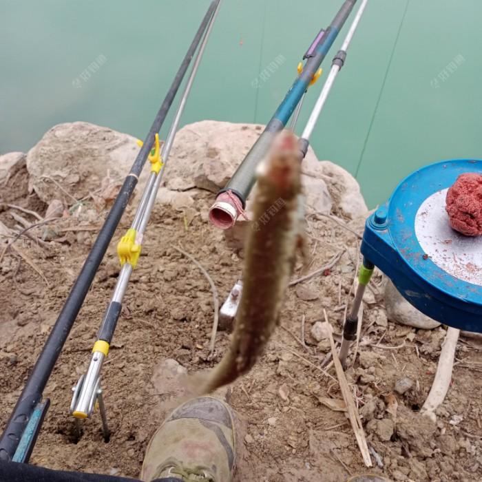 再战老钓点,饵料对口鱼获增(图6)