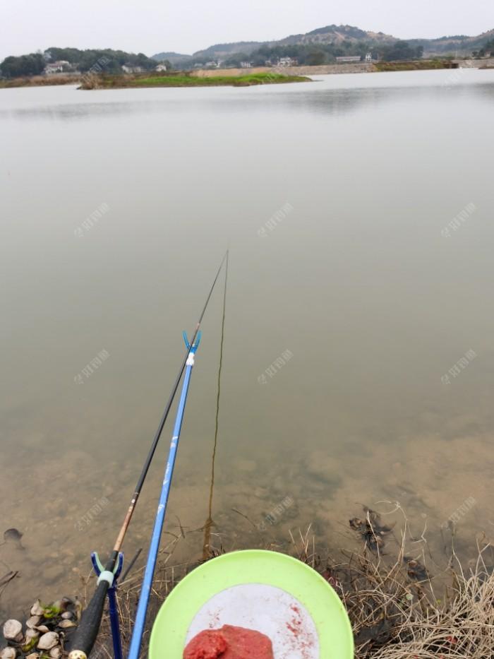 这是我的正前方,我用的3.6米的鲫鱼竿,37钓性!前方水不深,我钓的地方才1.2米