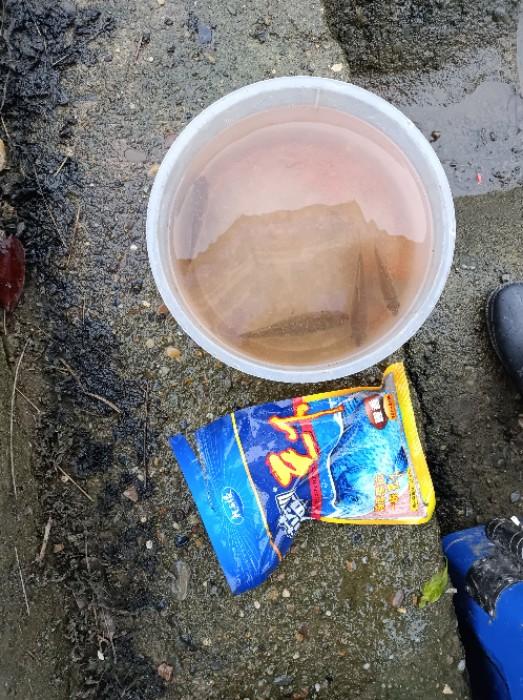 前面放生了一尾草鱼。所有鱼获拍照后放生了!!