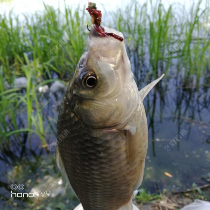 到中午了有鱼来进食了