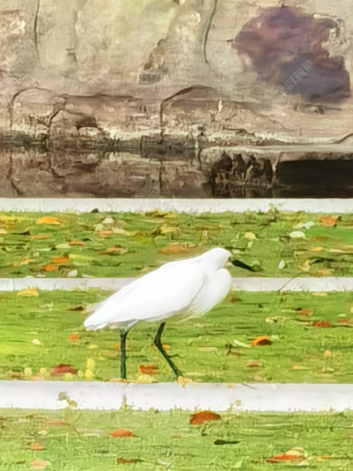 捕鱼高手,白色水鸟,来张特写!