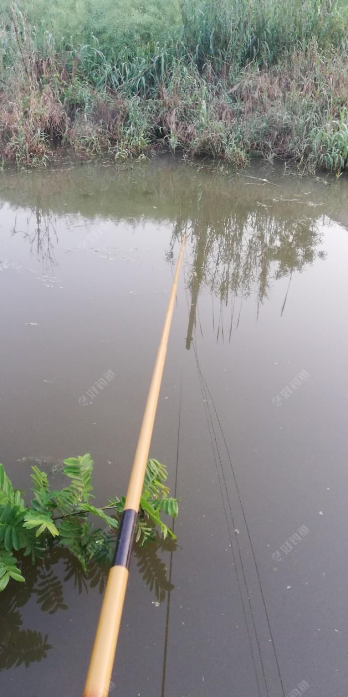 河南岸钓和北岸的芦苇从,经典的藏鱼处,真正做钓藏的是鲤鱼,一直在拍水,郁闷