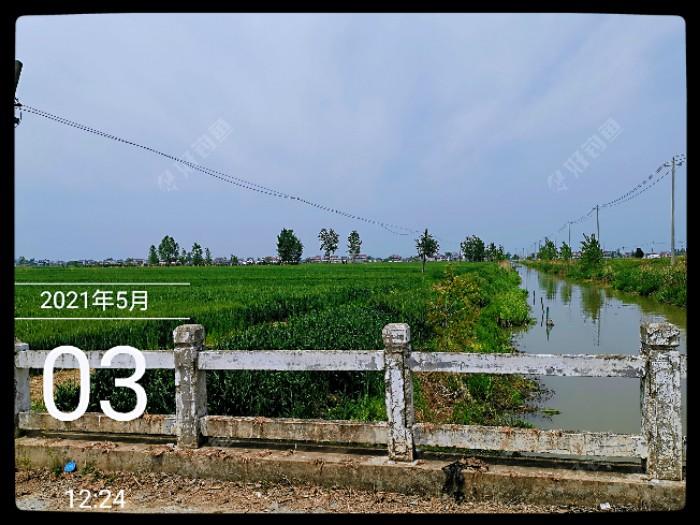 一片葱绿的麦田,这条灌溉用的小河通向界圩河,再向被前行四五公里就可到达界圩河。