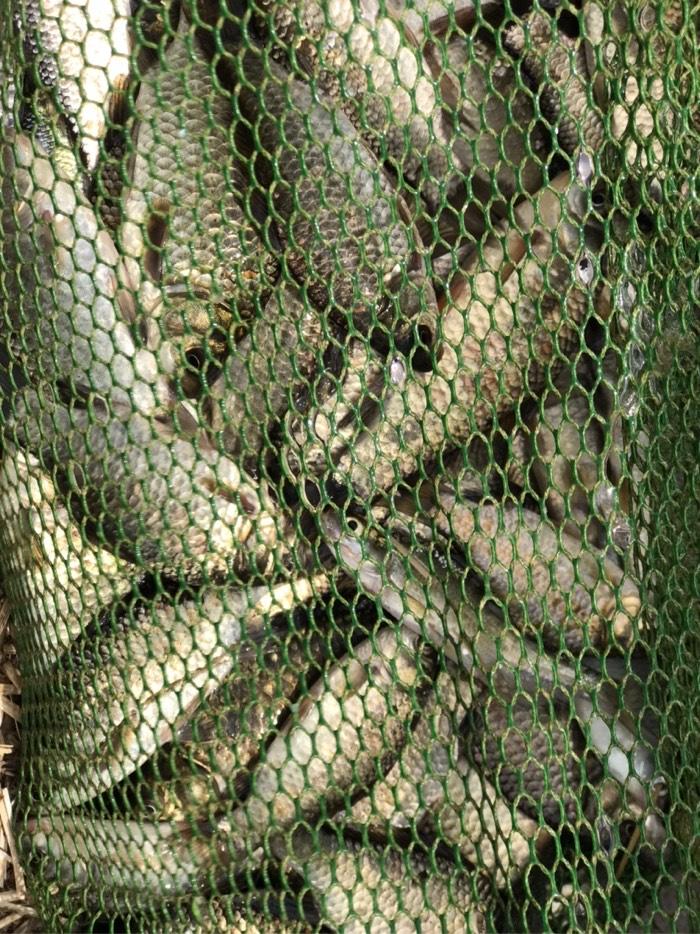 今天的鱼获,不到三斤鱼。