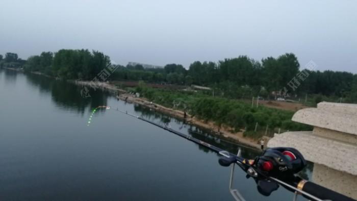 桥下手竿夜钓的人不少,但几乎没有鱼护下水