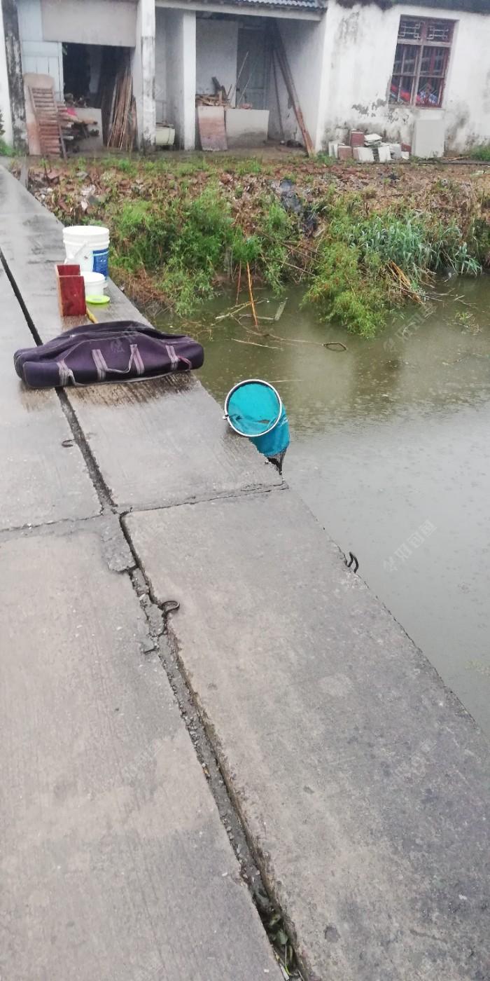 中雨如期,离家近装备也简单些,雨中在桥至少舒服些,可惜只能钓东面,迎光,西面有高压线