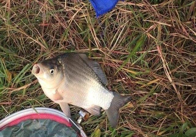 明明是自己钓的鱼,偏被说成是买的