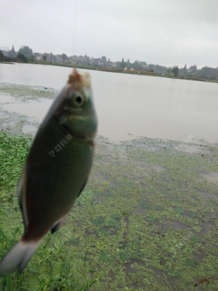 Screenshot_20210716_183718_com.yuqu.diaoyu_edit_902863799433587.jpeg