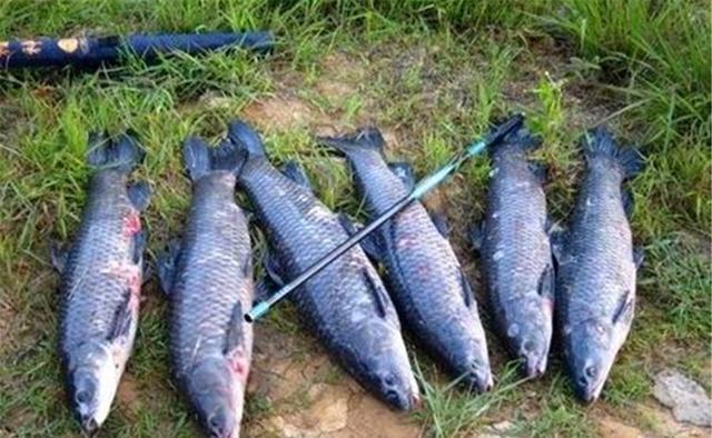 仲秋钓鱼,要钓刮风的天气,这样的位置大鱼扎堆