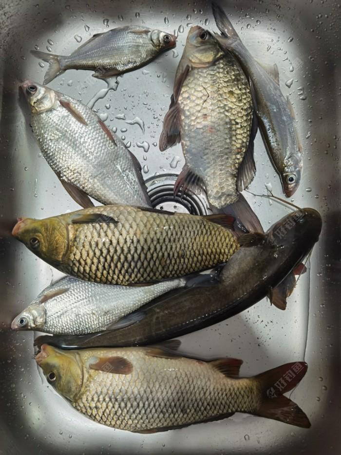 一个晚上五个鱼种