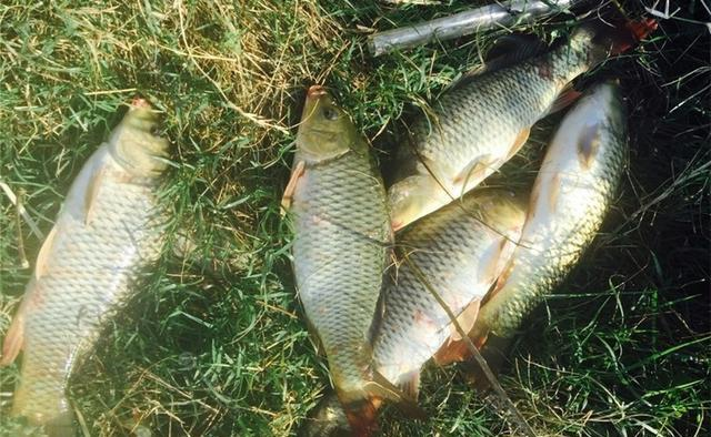 深秋钓鱼,别在这4种钓位下竿