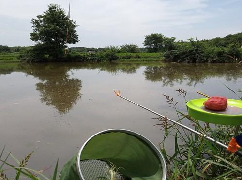 解析夏季野生鲫鱼难钓的两大原因